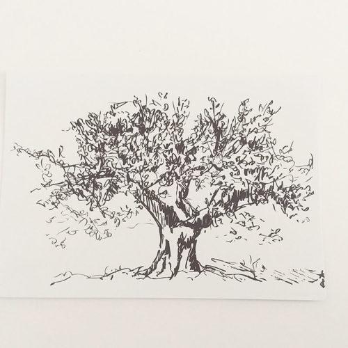 Verso de la carte postale, noir et blanc. Olivier