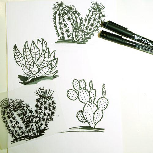 dessins préparatoires de la collection Cactus